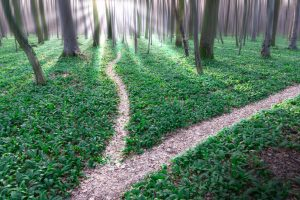 Paths diverging in a forest